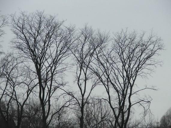деревья вечером