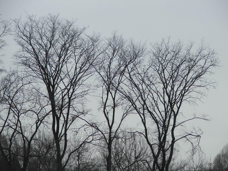 Фото голых деревья 9 фотография