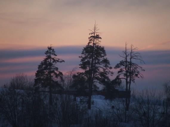 Сосны на фоне закатного неба