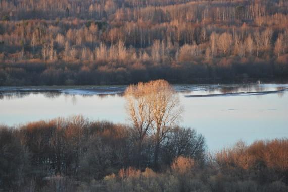 дерево вечером у реки на закате